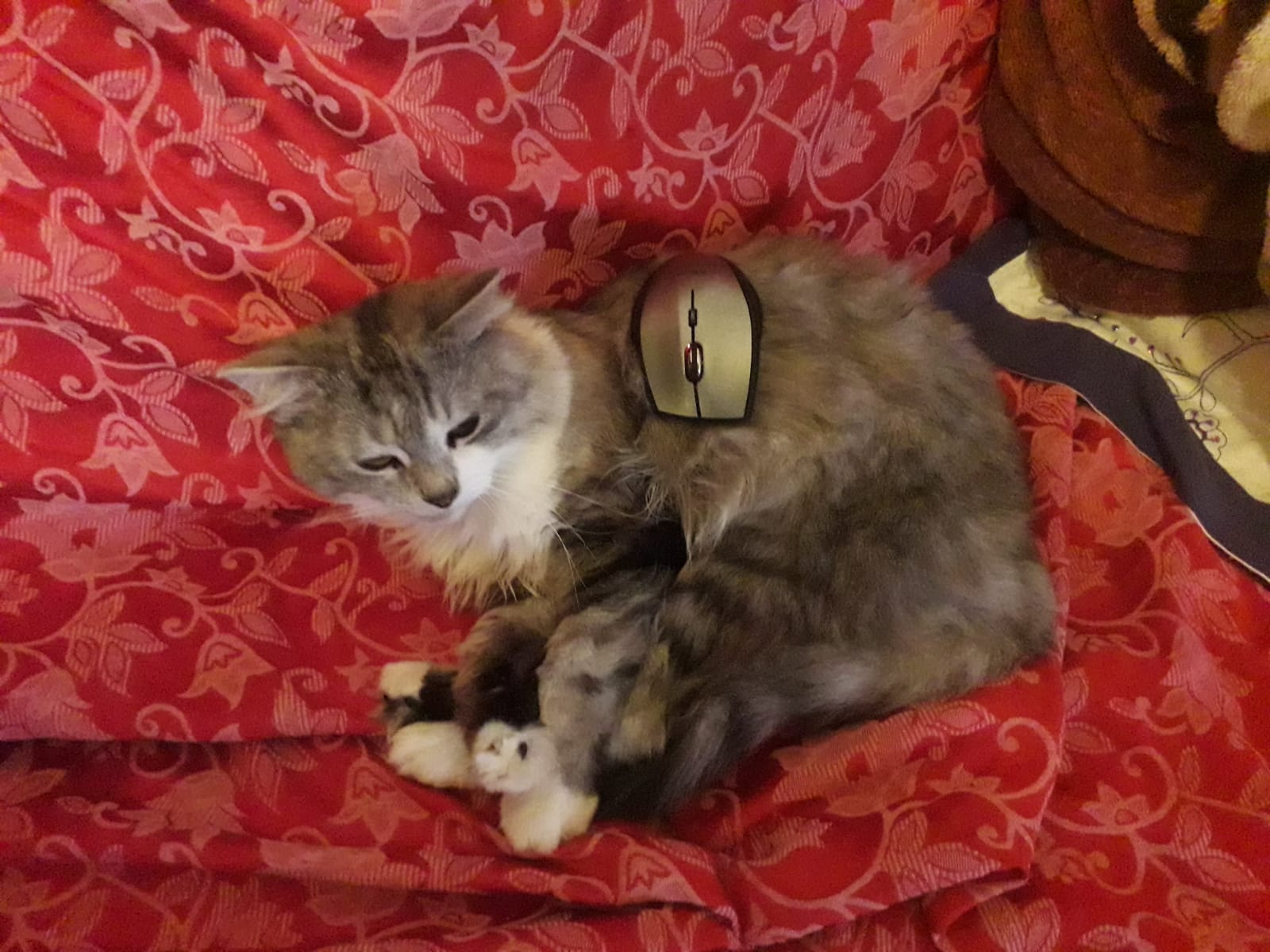 A cat lies with a computer mouse on its back
