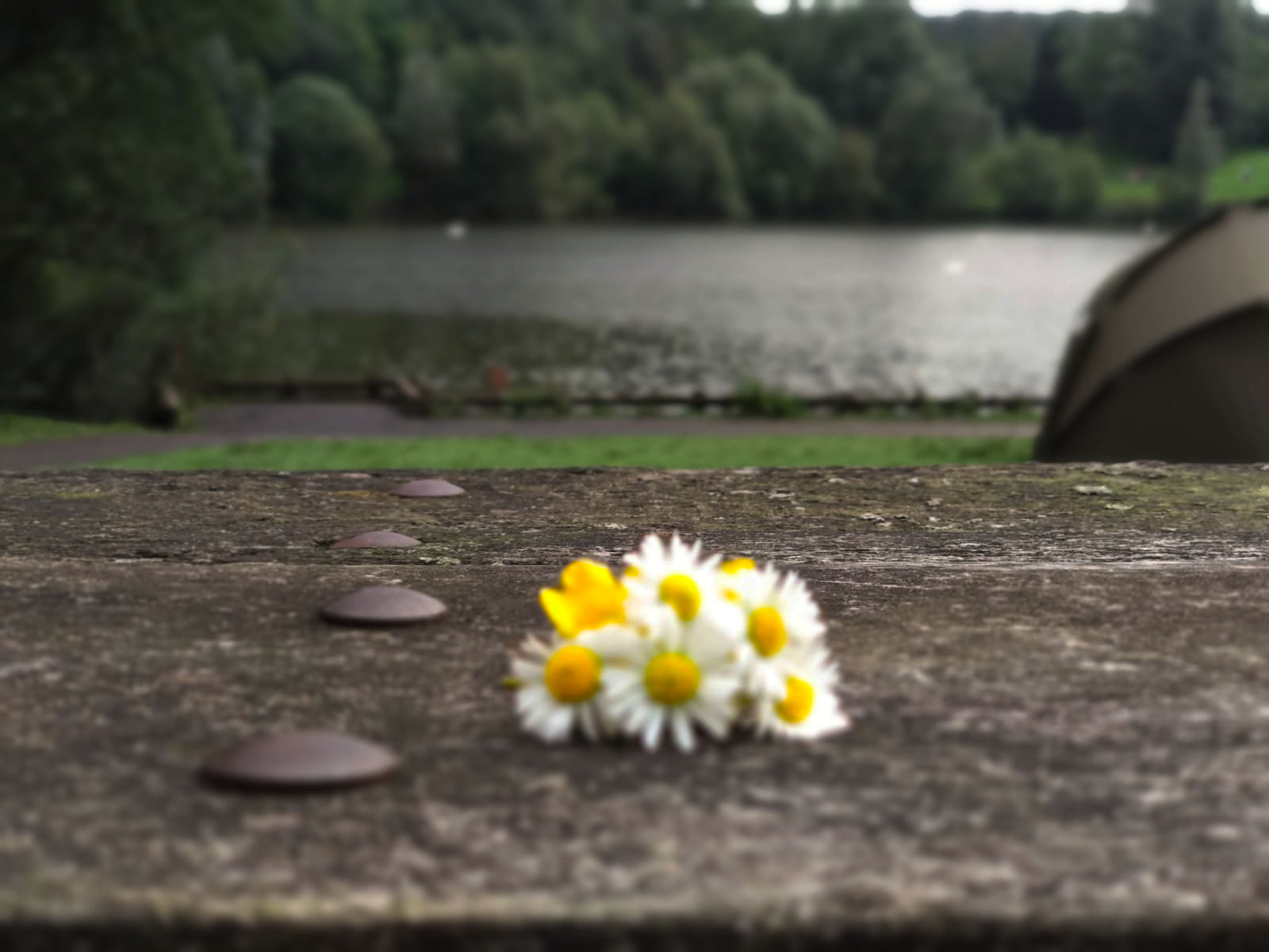 A group of pretty daisies have been rested on the ground with a river behind them