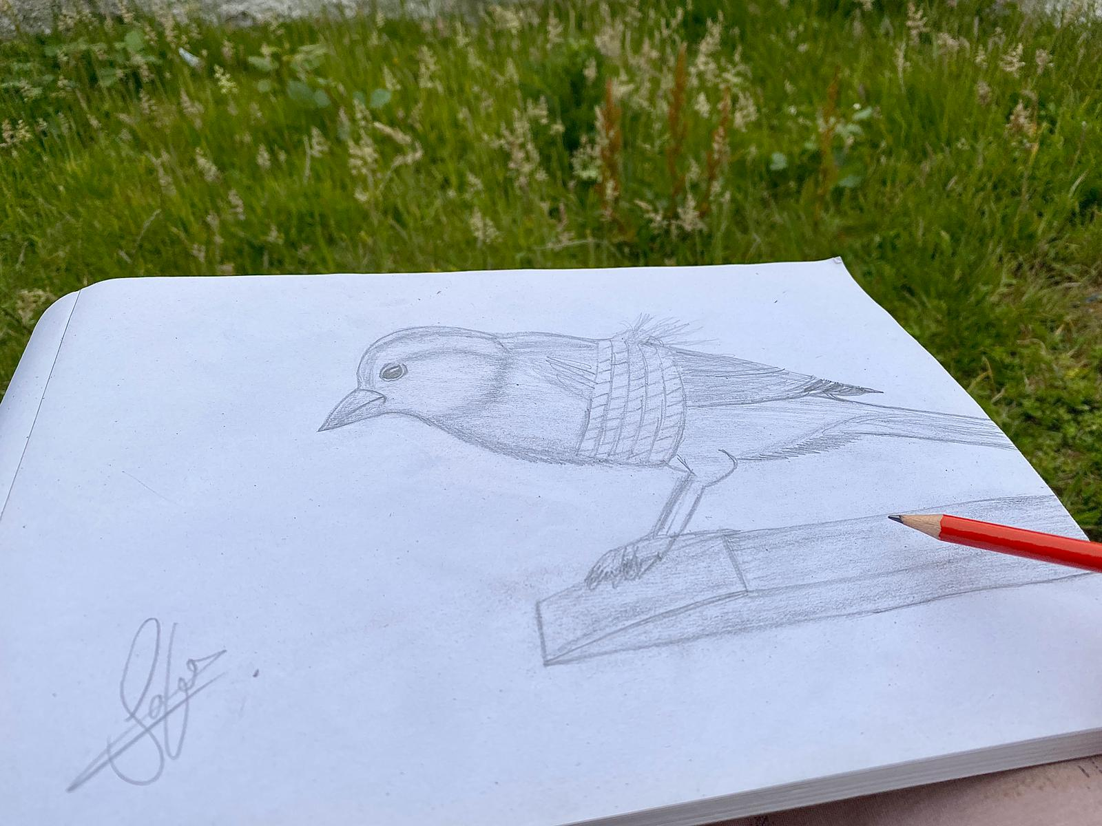 A bird is shown in a pencil drawing tied up and unable to fly