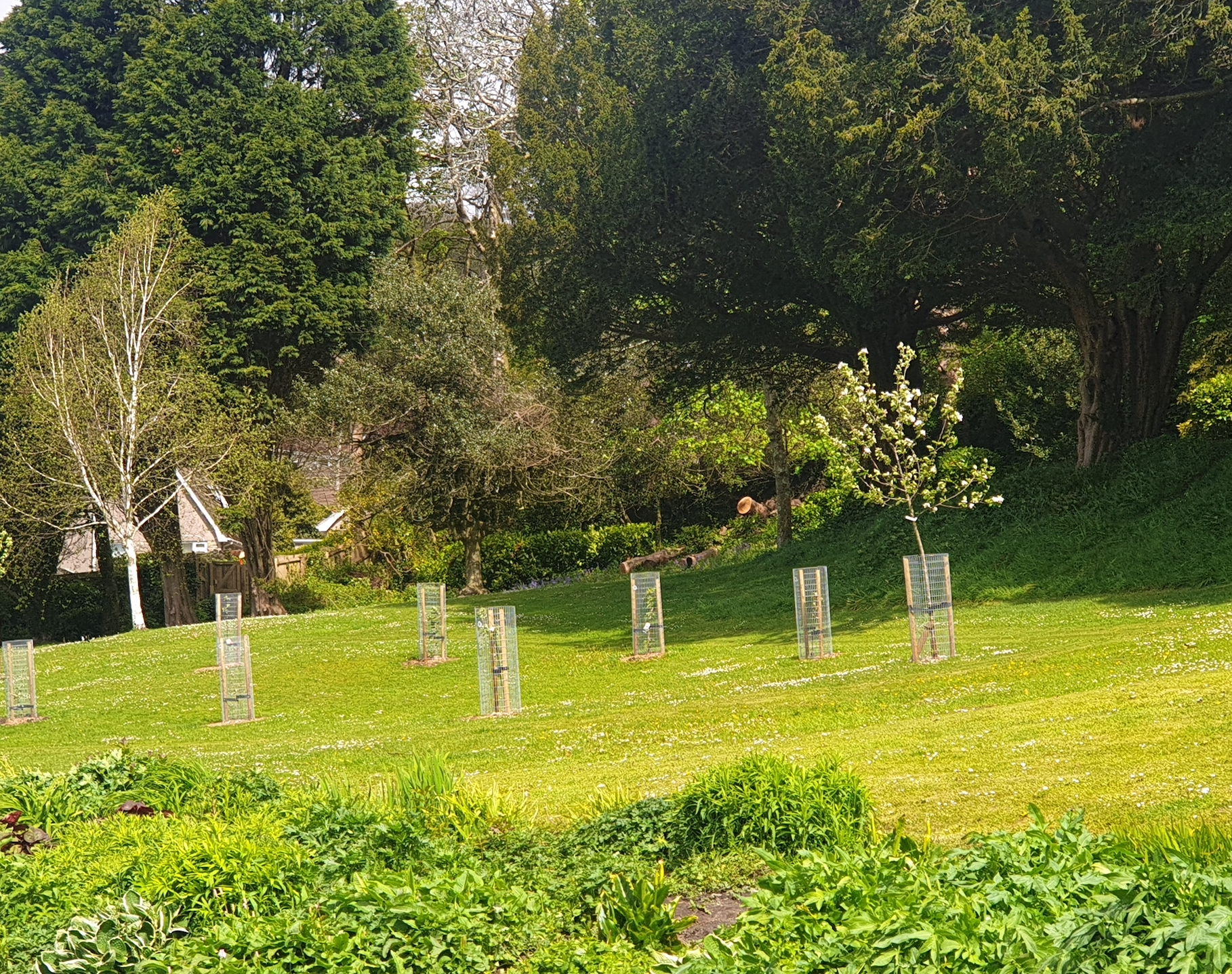 Growing Sanctuary in Swansea